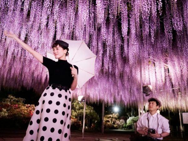 あしかがフラワーパーク「ふじのはな物語~大藤まつり2019~」