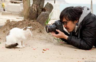 猫の写真&グッズ展「ねこがかわいいだけ展」