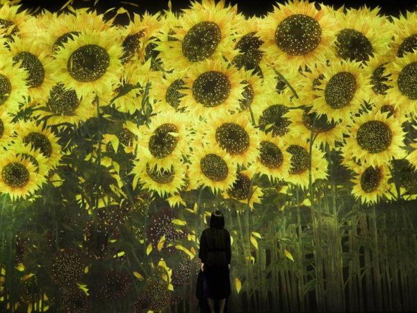 """チームラボ""""約10万本のひまわり""""咲き誇る新作の展示"""