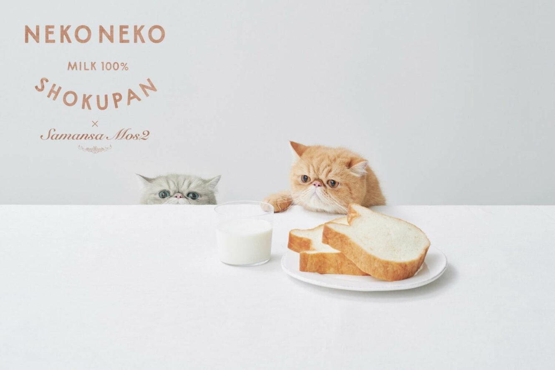 ねこ型高級食パン「ねこねこ食パン」とサマンサ モスモスが初コラボ!Tシャツ&バッグ