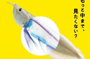 """サンシャイン水族館にて、""""透明な生き物""""が主役の特別展「スケ・ボーン展~meets カメの甲羅はあばら骨~」"""